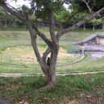 琉球ゴールデンキングス新アリーナ建設予定地に行ってみました