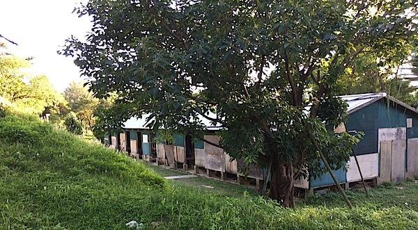 沖縄市野外ステージ・牛舎