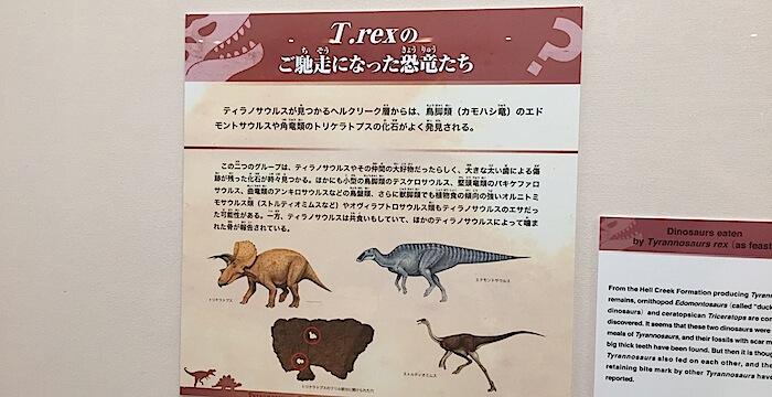 ティラノサウルス豆知識