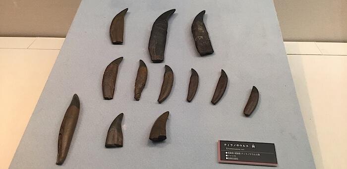 ティラノサウルス歯