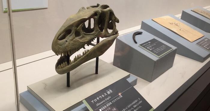アロサウルス頭骨