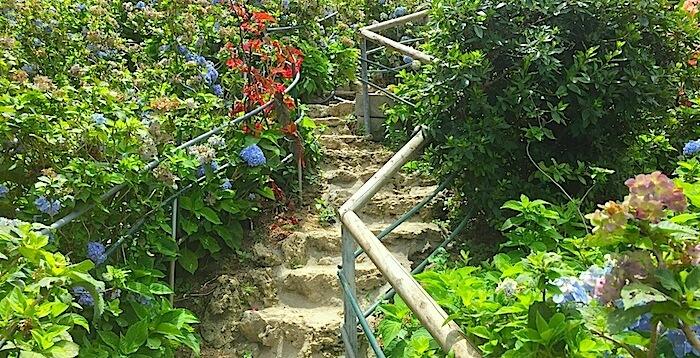あじさい階段