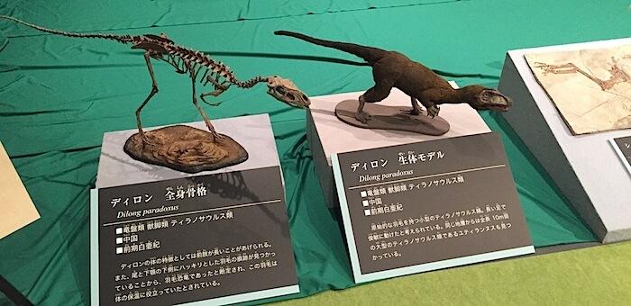 骨格・生体モデル
