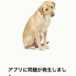 今年もAmazonアプリのエラーで あの犬に会える日がやってきた!